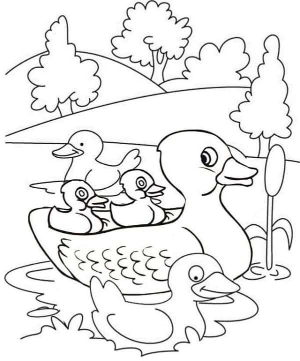 duck drawing in the pond to print for free