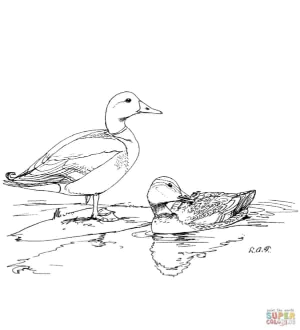 drawing of ducks in the pond to print
