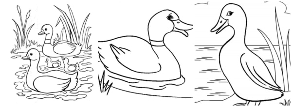 ducks in the pond coloring pages