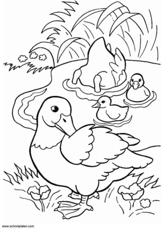 duck family in pond coloring page
