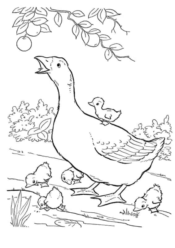 duck family coloring page to print and paint