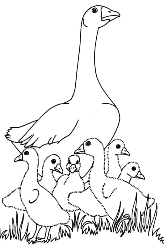 mother duck with chicks coloring page
