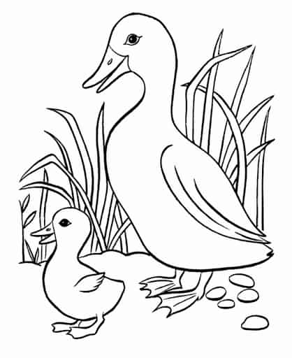 duck with chick coloring page