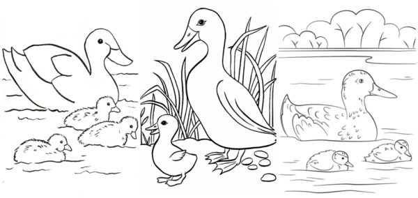duck with chicks coloring pages