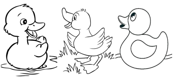 1617816735 843 43 COLORFUL DUCK drawings Print 100 free