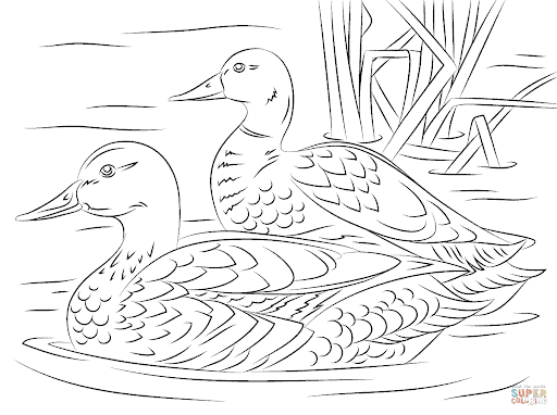 duck on the river coloring page