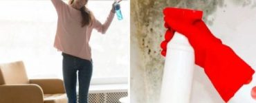 how to remove mold from the wall