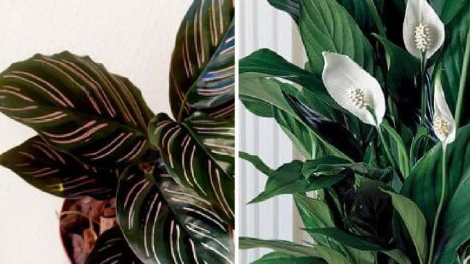 11 indoor plants with low light