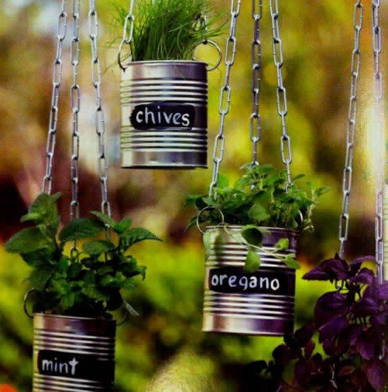 Beautiful suspended vegetable garden with cans