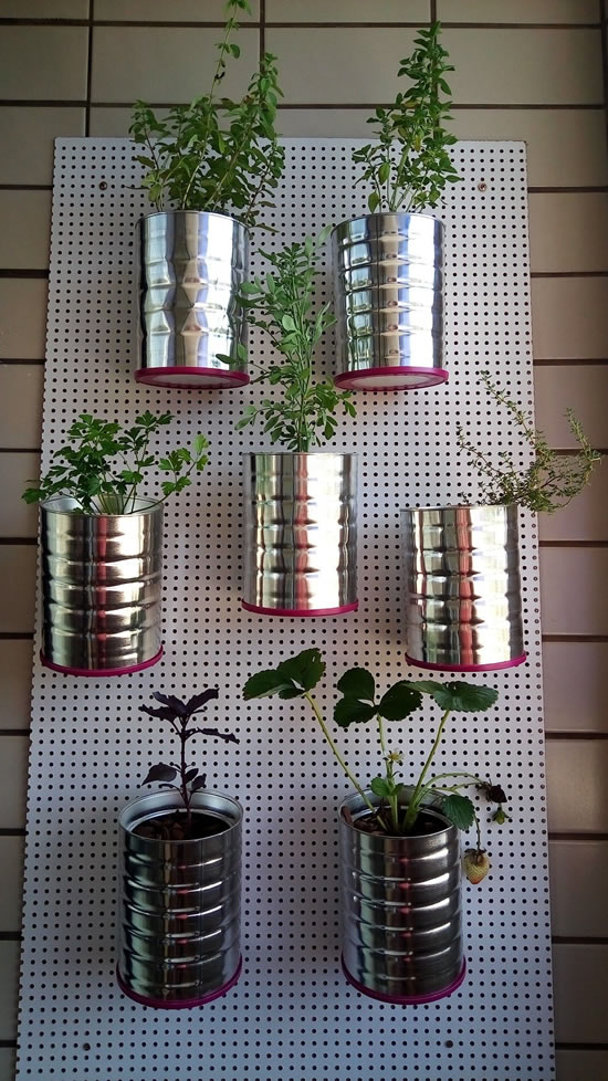 Plant your seedlings in cans