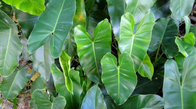 bromeliad indoor plants