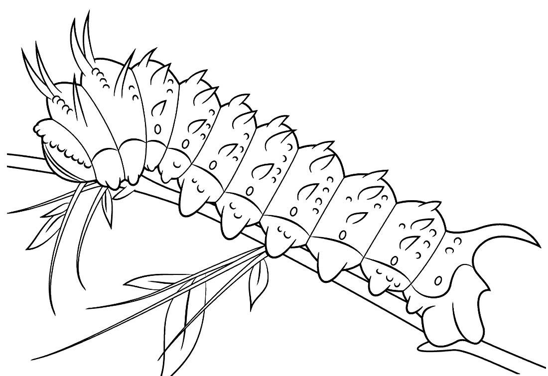 Cute Caterpillar Drawing