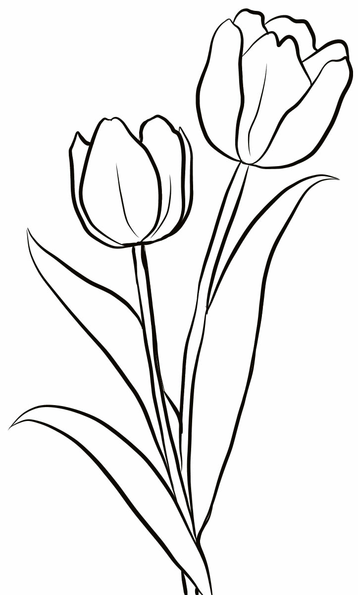 Tulip drawing to paint