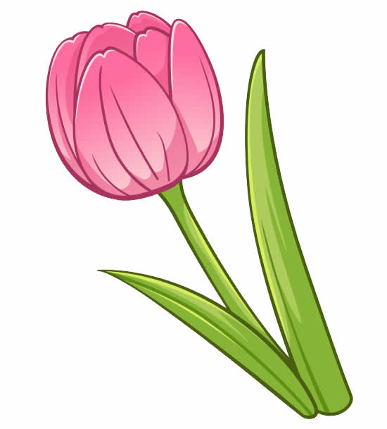 Tulip Mold